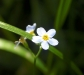 nature_flower1