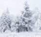 nature_snowy_trees2