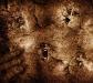 dark-gothic-faces-960x854