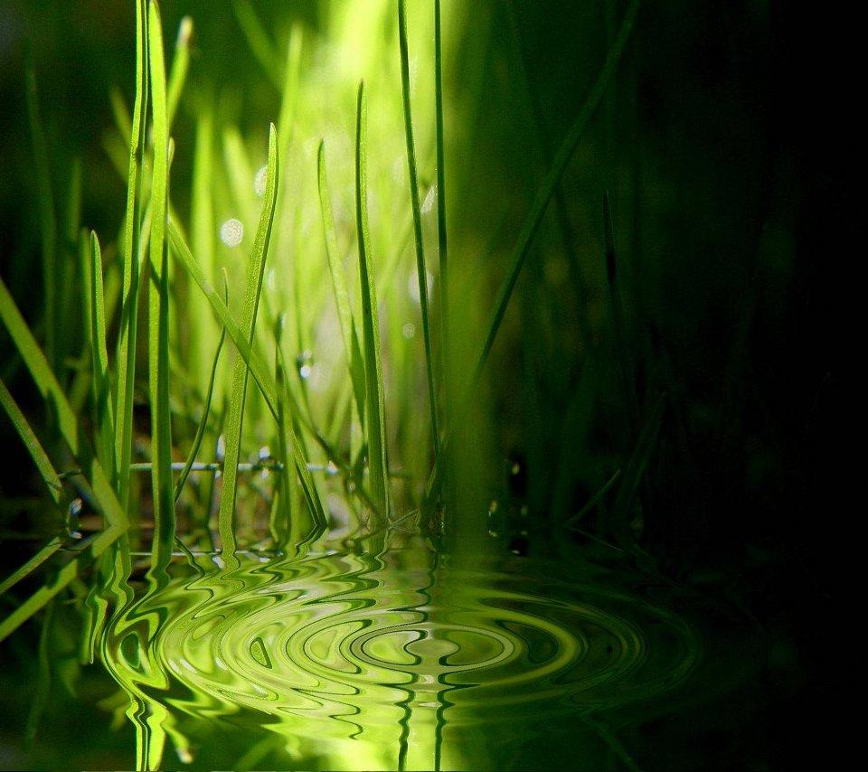 droid_grass