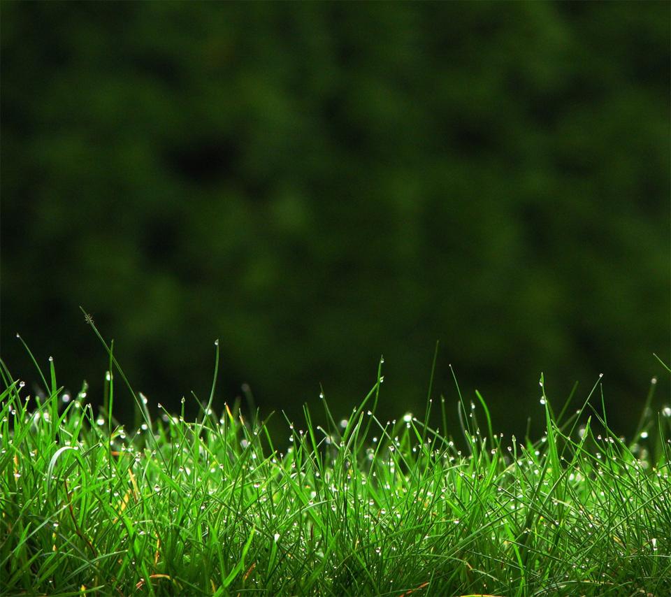 grass_mdppiidb