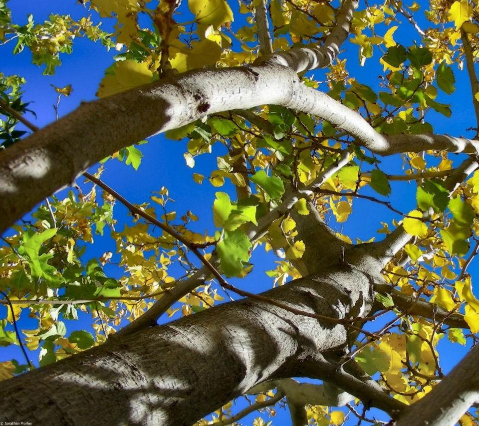 jmorley-fall-sky