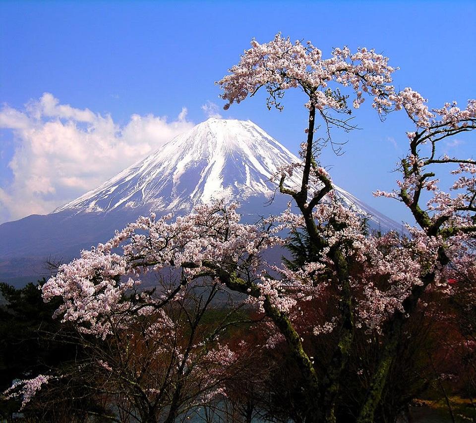 mountain_flower