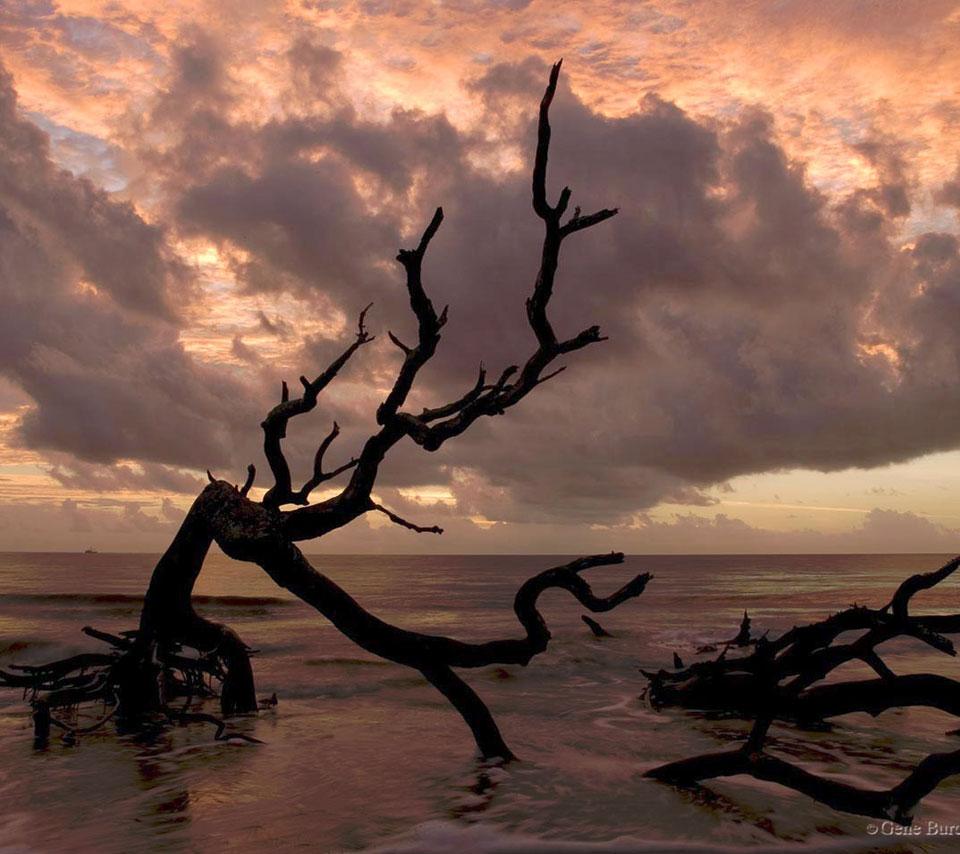 nature_drift_wood