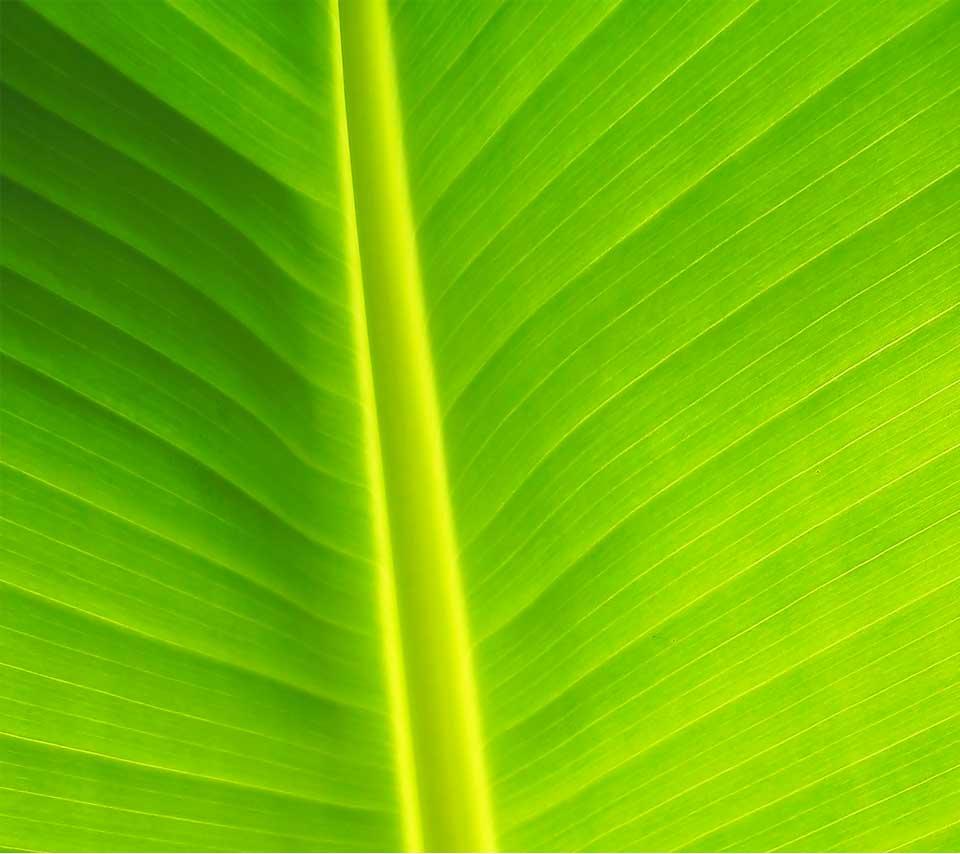 nature_leaf3