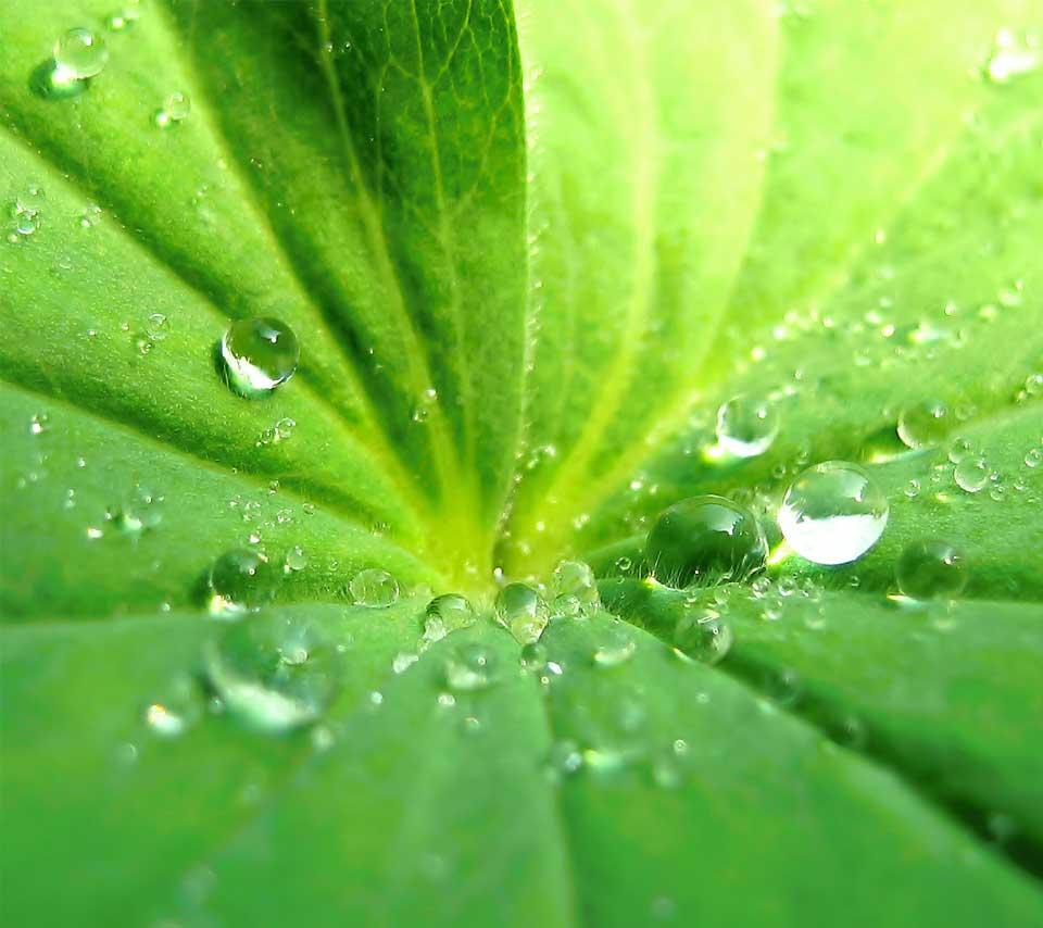 nature_leaf4