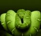 animal_green_boa2