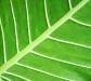 nature_leaf5