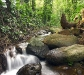 nature_wooded_stream